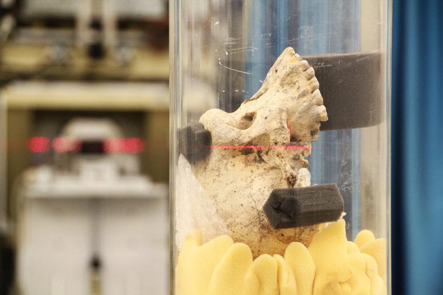 Modernes Gehirn ist vor 1,7 Millionen Jahren entstanden